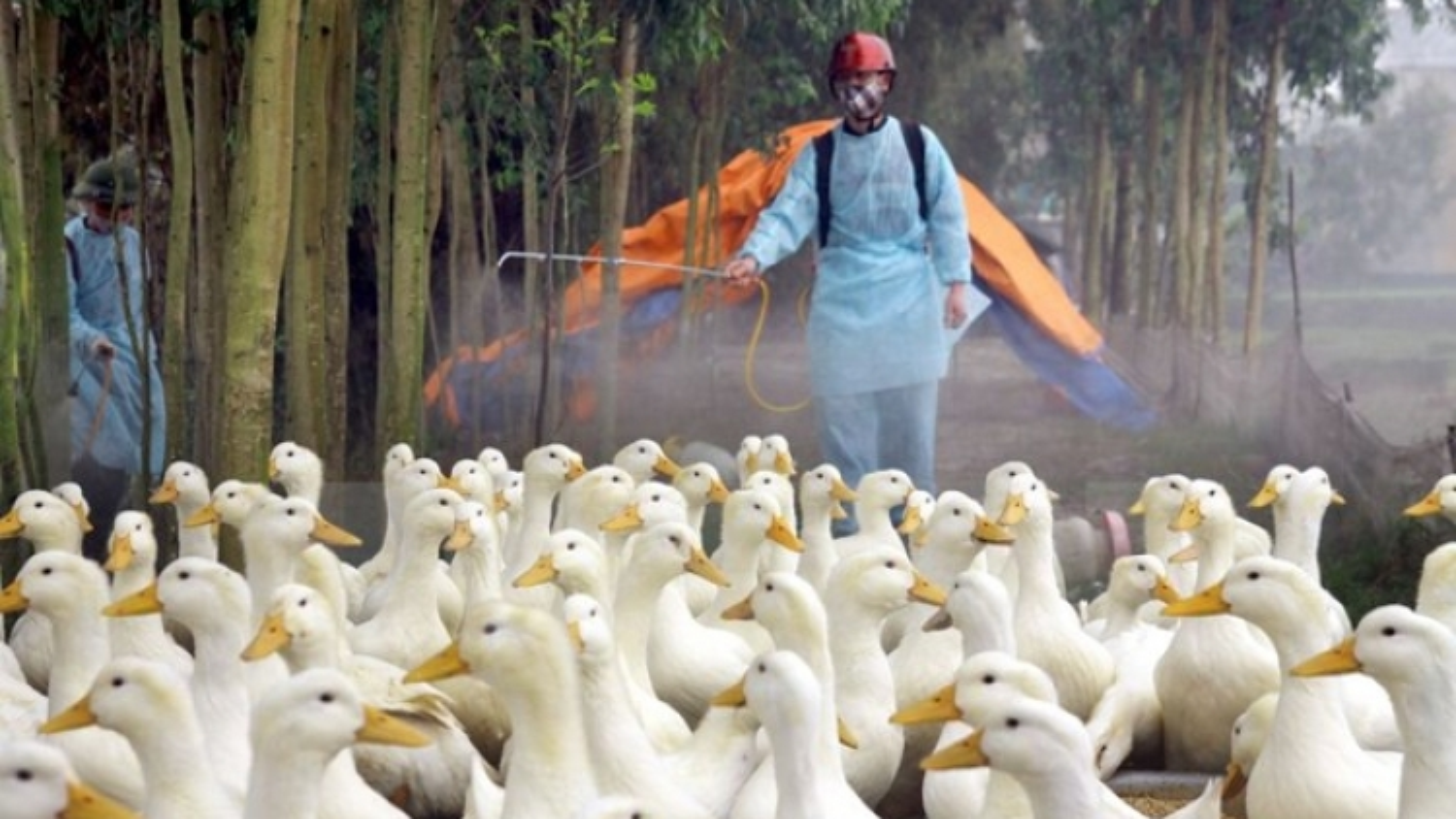Vietnam reports yet another case of bird flu