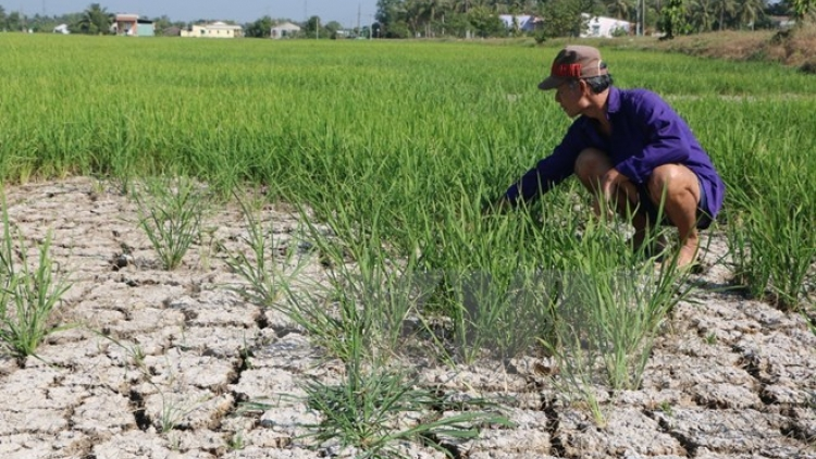 WB helps farmers in Mekong Delta adapt to climate change