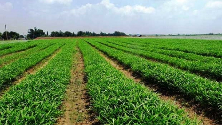 Vietnam tycoons betting on agriculture sector