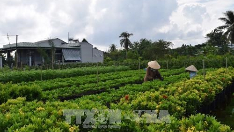 Dong Thap chooses six craft villages for preservation