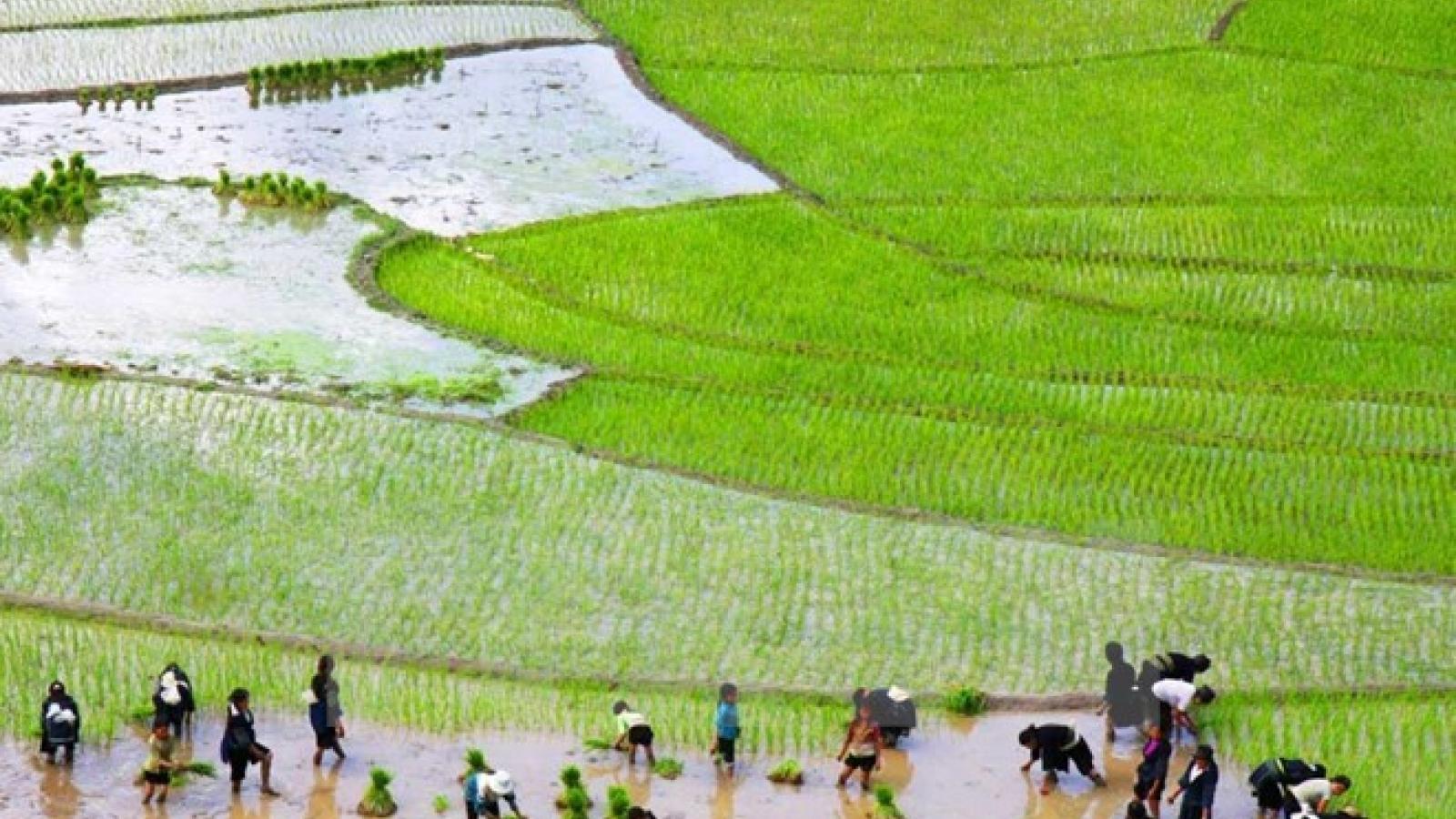 Workshop spotlights draft APEC action plan on rural-urban development