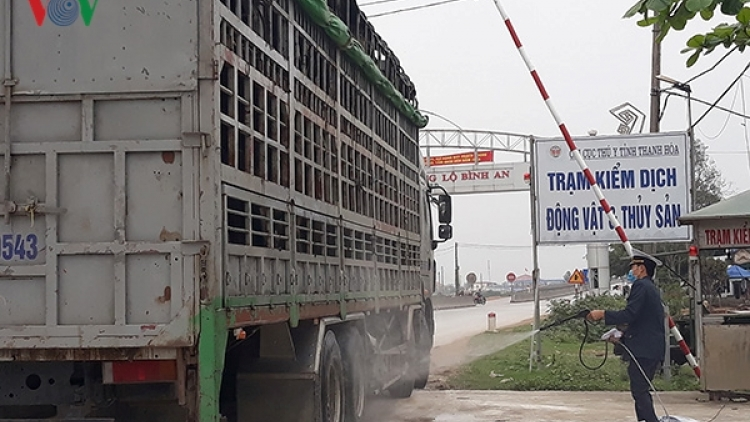 Thanh Hoa detects three additional ASF outbreaks