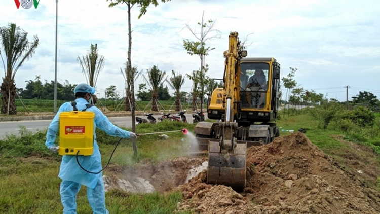 Thua Thien Hue takes drastic measures to combat spread of ASF