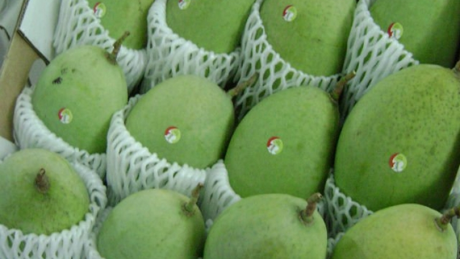 Mango shipments to Australia on the upswing
