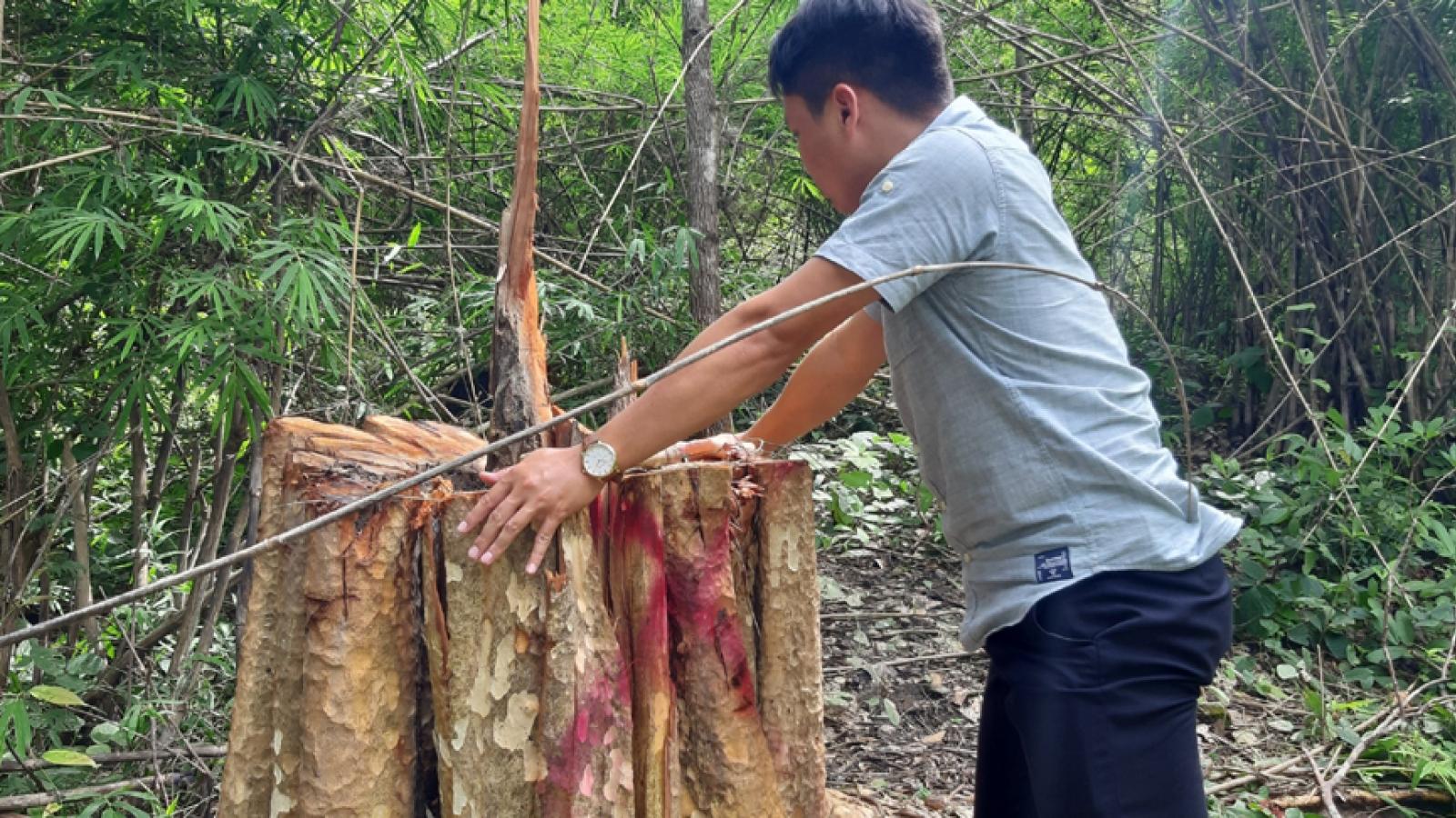 Bắt giữ 2 ô tô và 13 xe độ chế trong vụ phá rừng biên giới Gia Lai