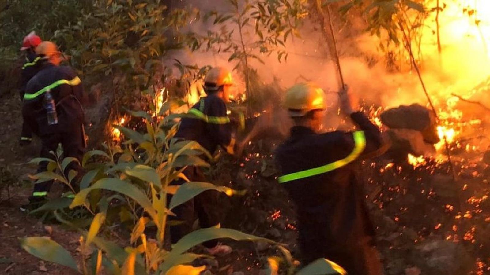 Nguy cơ bùng phát cháy rừng cao do nắng nóng gay gắt ở Nghệ An