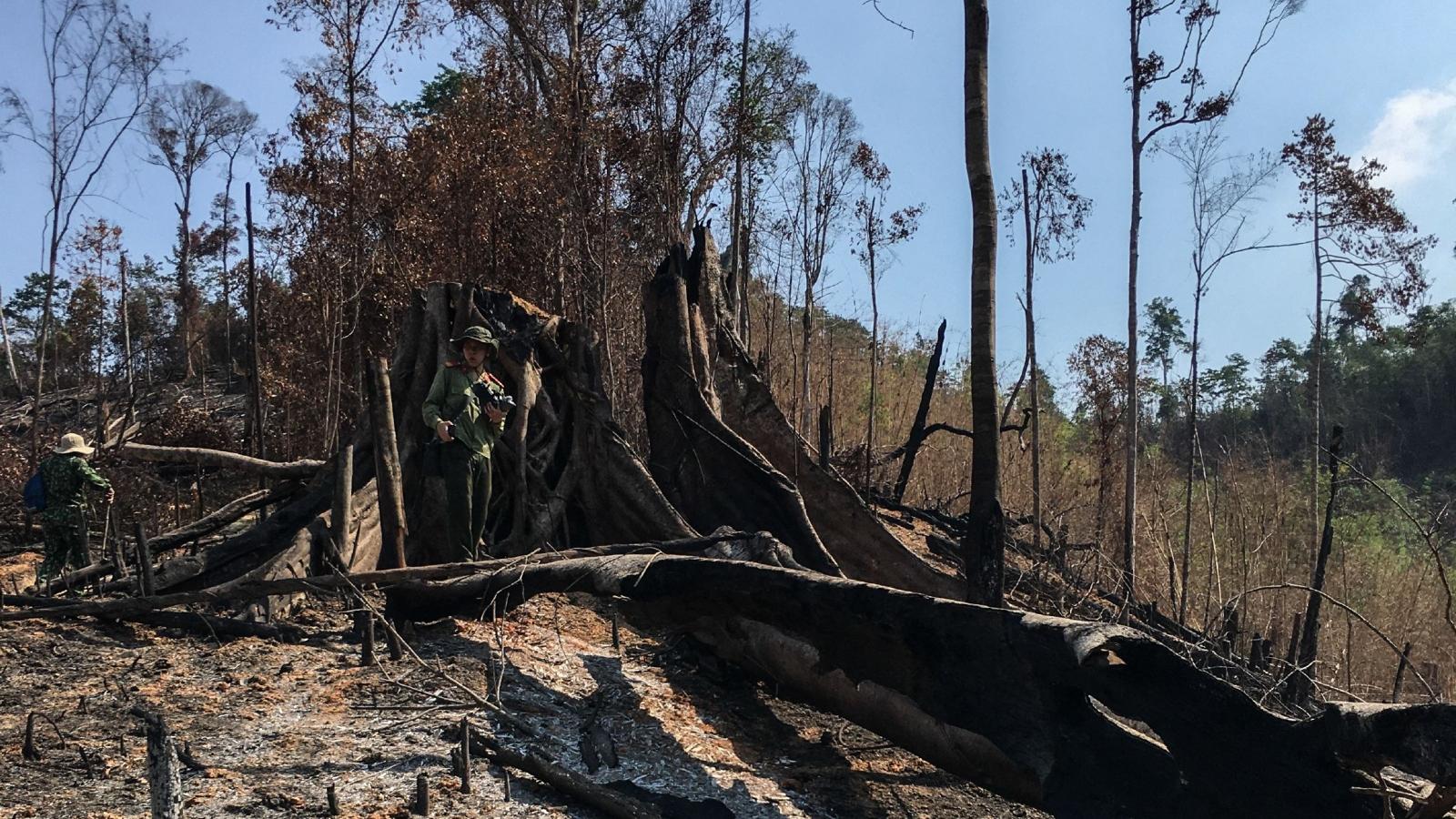 Nhập nhằng số liệu rừng và mất rừng ở Tây Nguyên