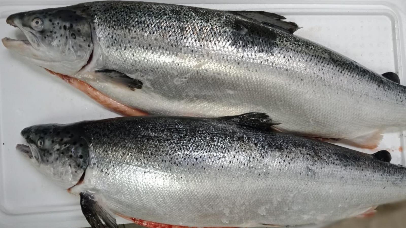 """Hải sản """"nhà giàu"""" ồ ạt giảm giá: Nghỉ lễ chọn nhậu cá hồi, tôm hùm"""