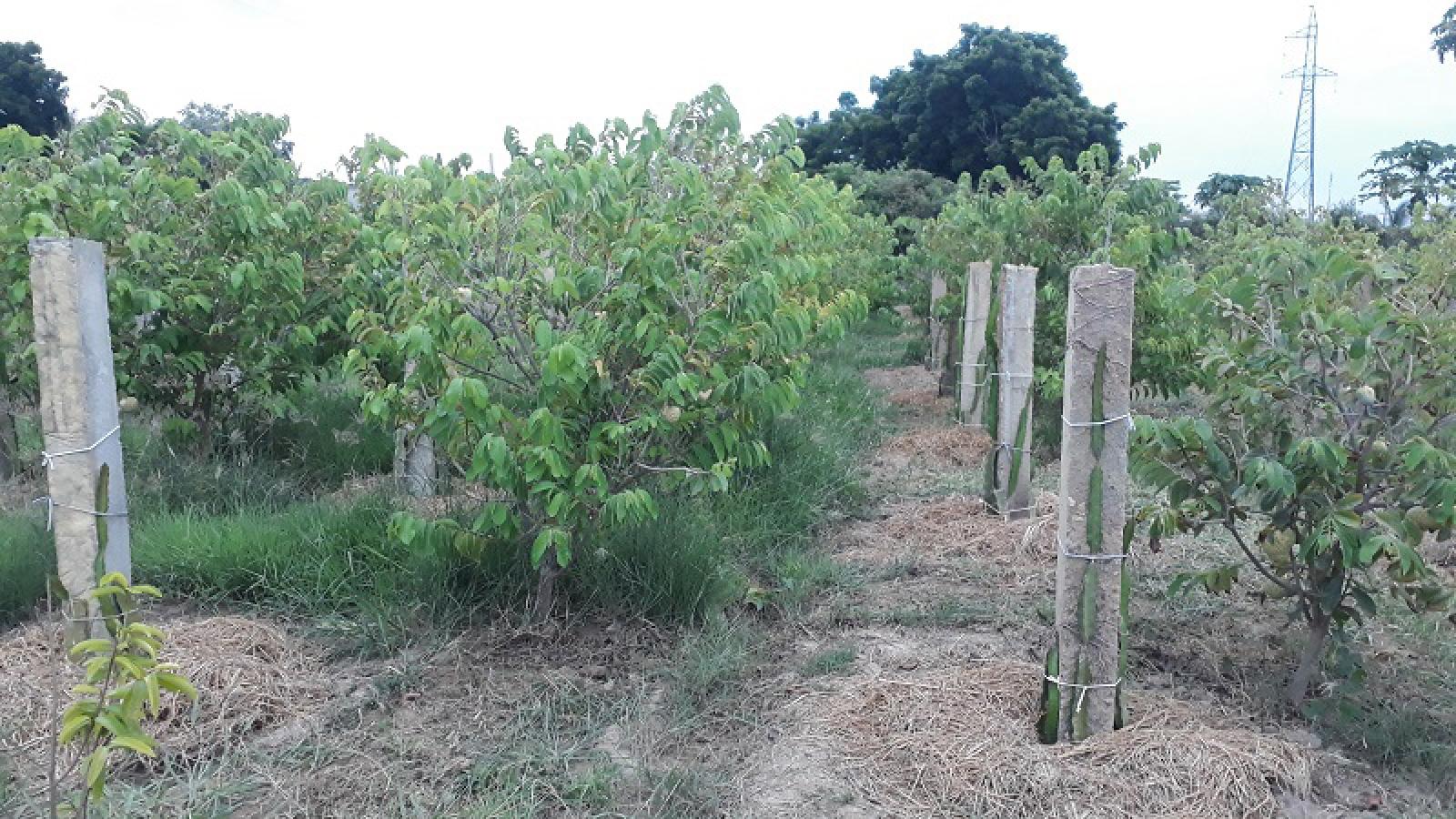 Chuyển đổi cơ cấu cây trồng giúp người dân thu tiền triệu mỗi tháng