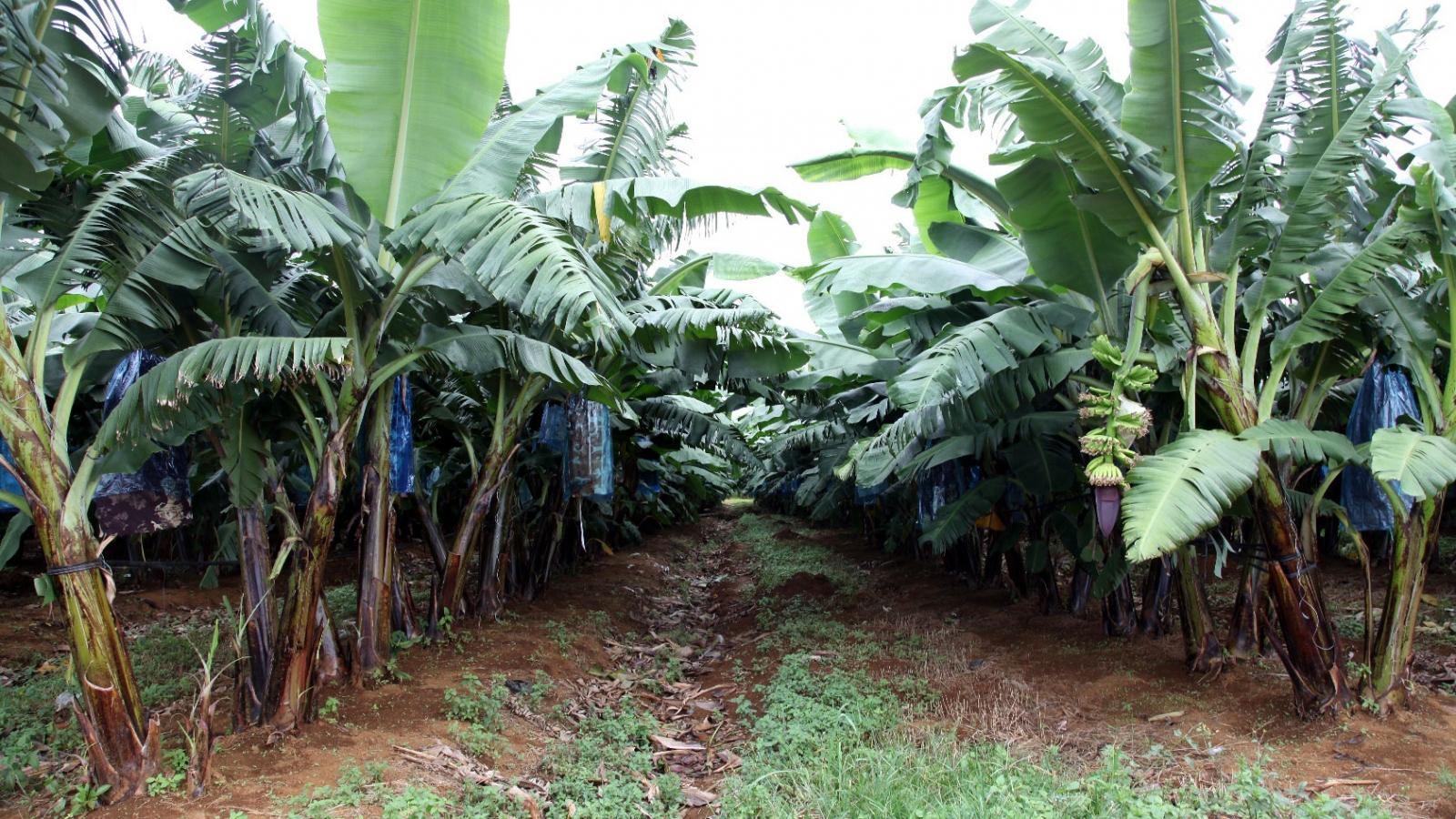 Lào đẩy mạnh xuất khẩu 13 loại nông sản với Việt Nam