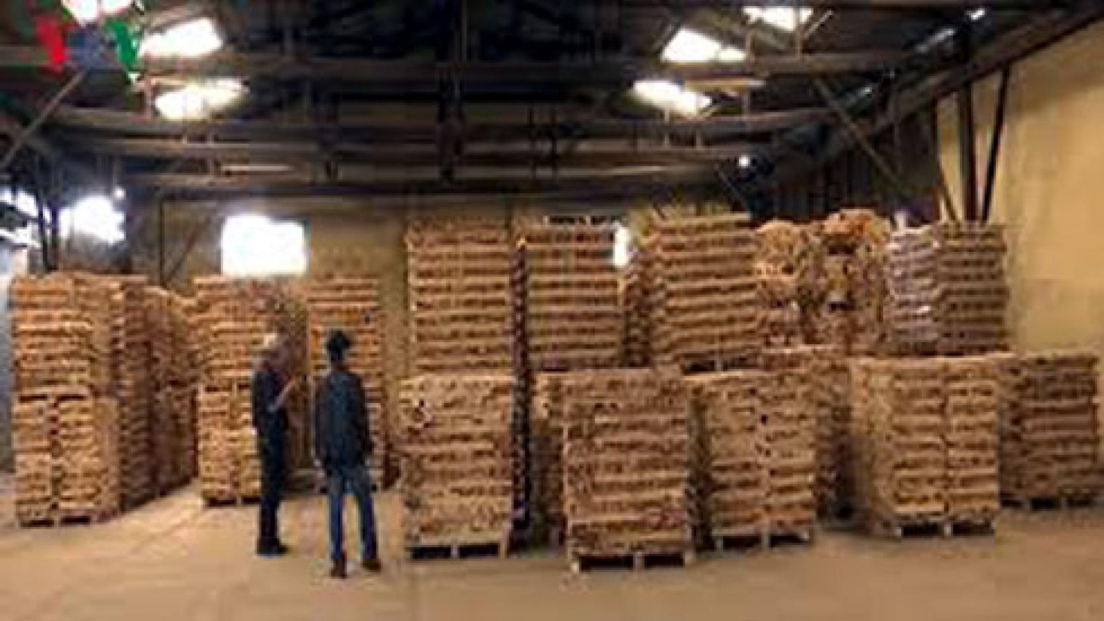 Chế biến và xuất khẩu gỗ tiềm ẩn nhiều rủi ro