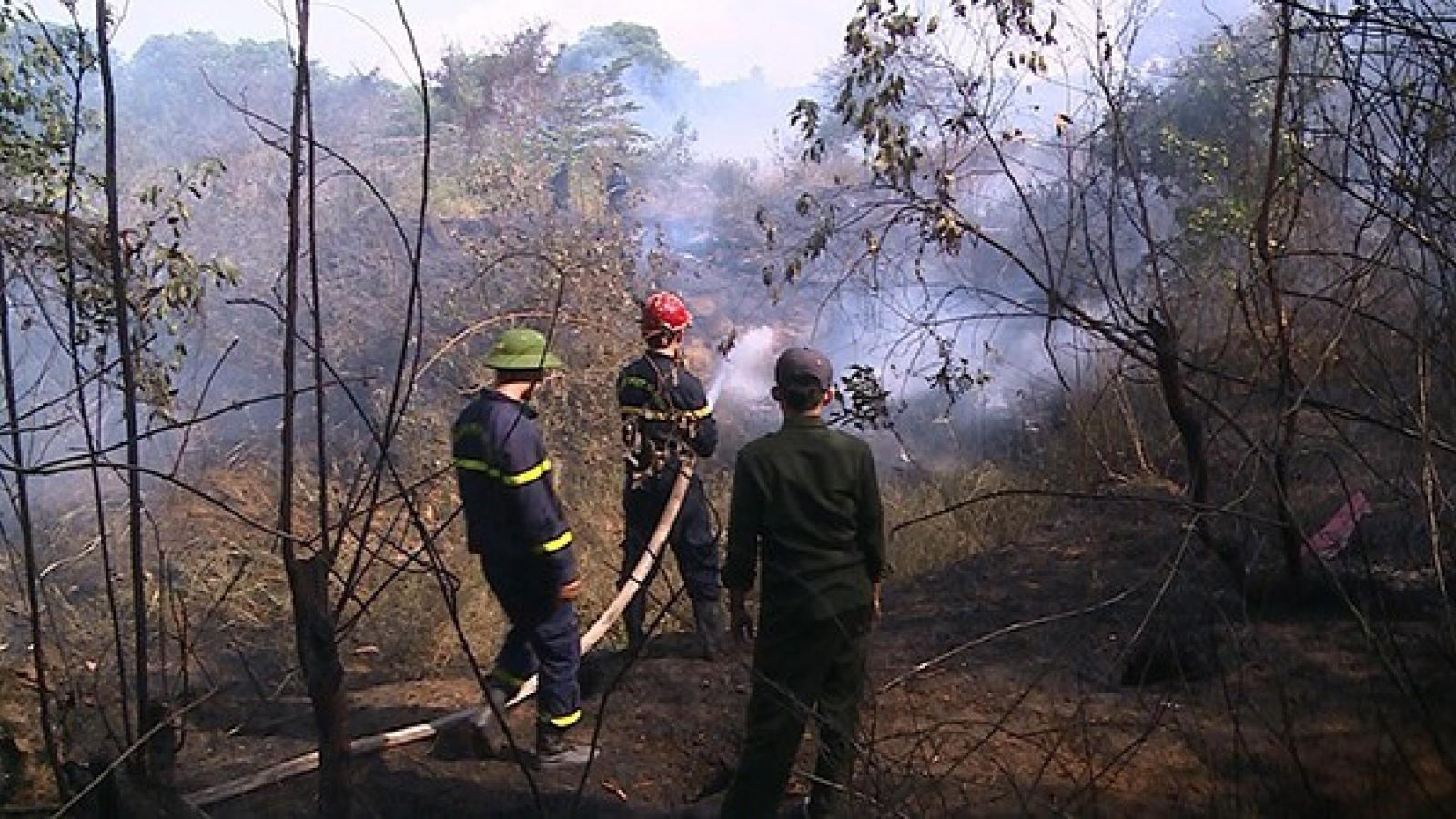 Miền Trung chủ động phòng chống cháy rừng