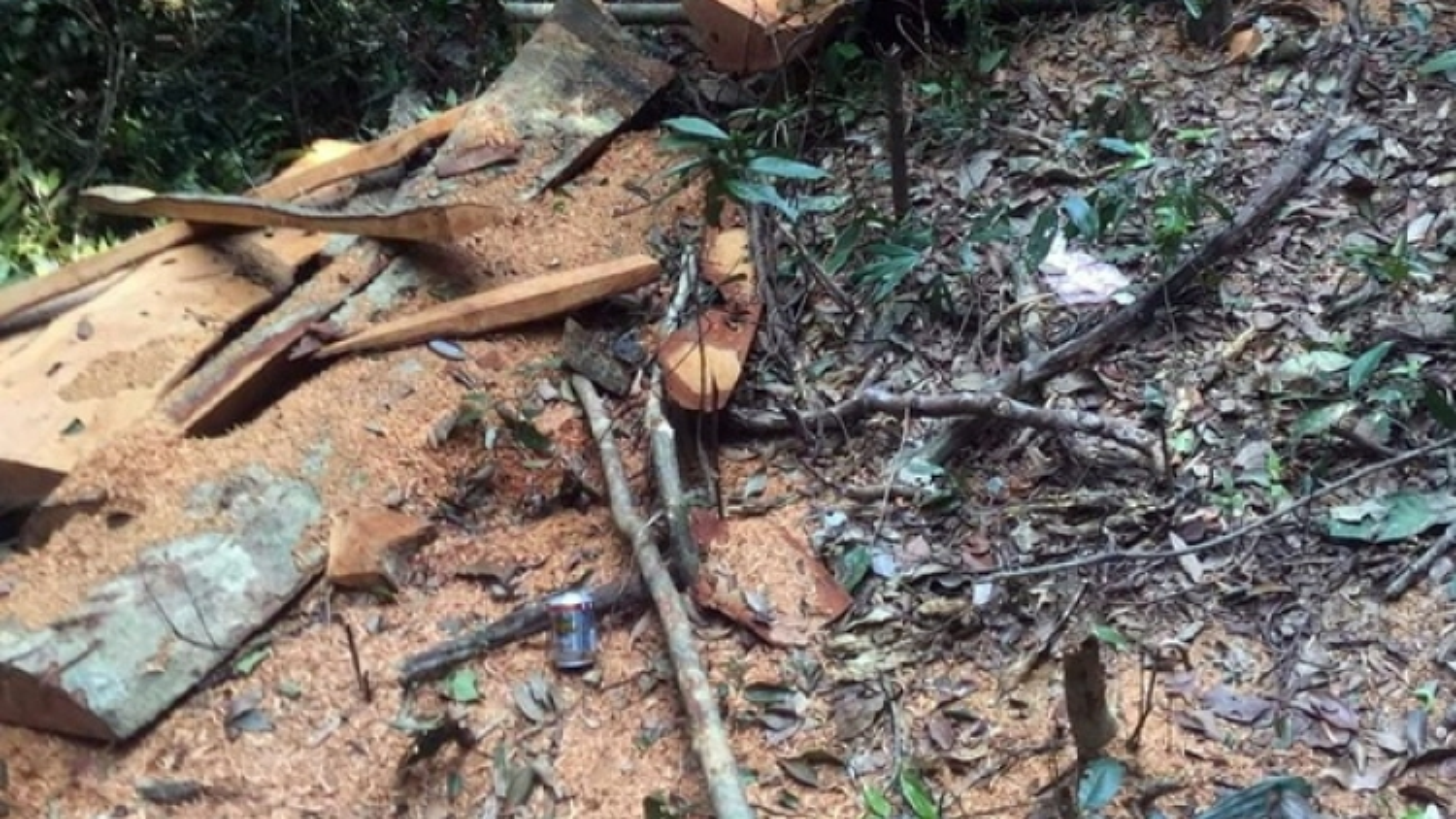 Lâm tặc liên tục chặt phá rừng lim tại Lâm trường Trường Sơn