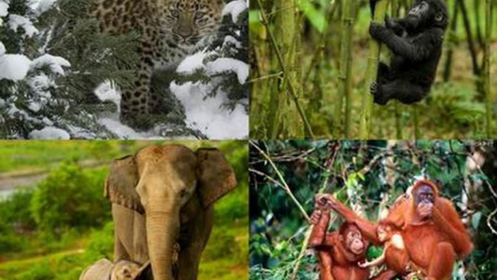 Vi phạm các quy định về bảo vệ động vật quý hiếm bị xử phạt thế nào?