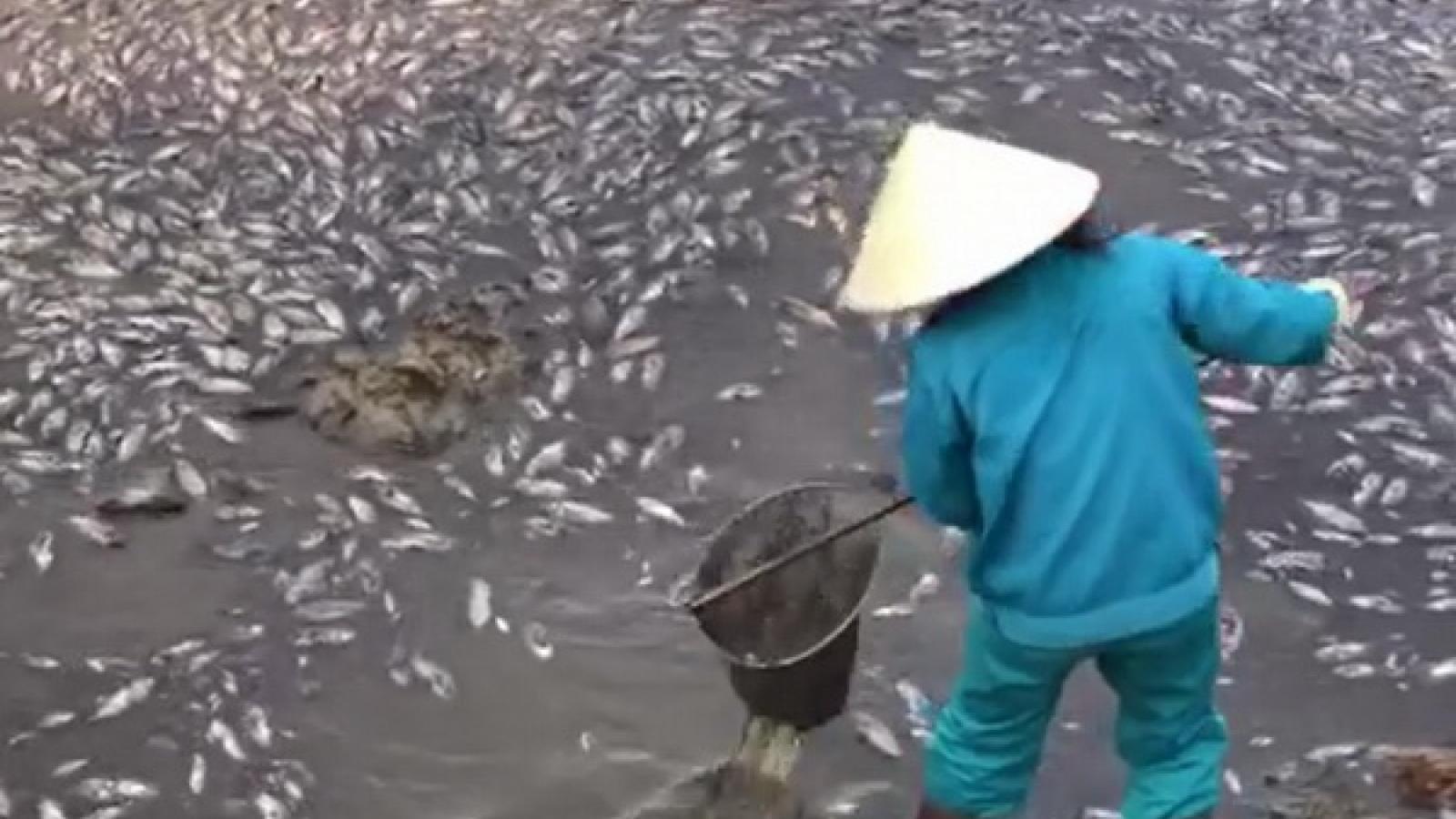 Cá chết hàng loạt nổi trắng hồ Trạm ở thành phố Đồng Hới