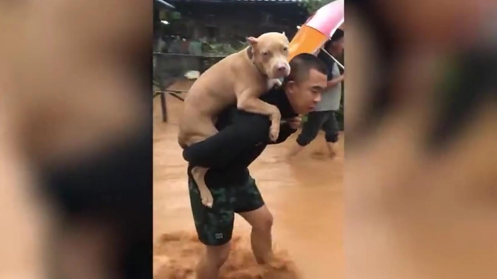 Video: Người chủ cõng chó cưng ra khỏi khu vực lụt lội ở Thái Lan