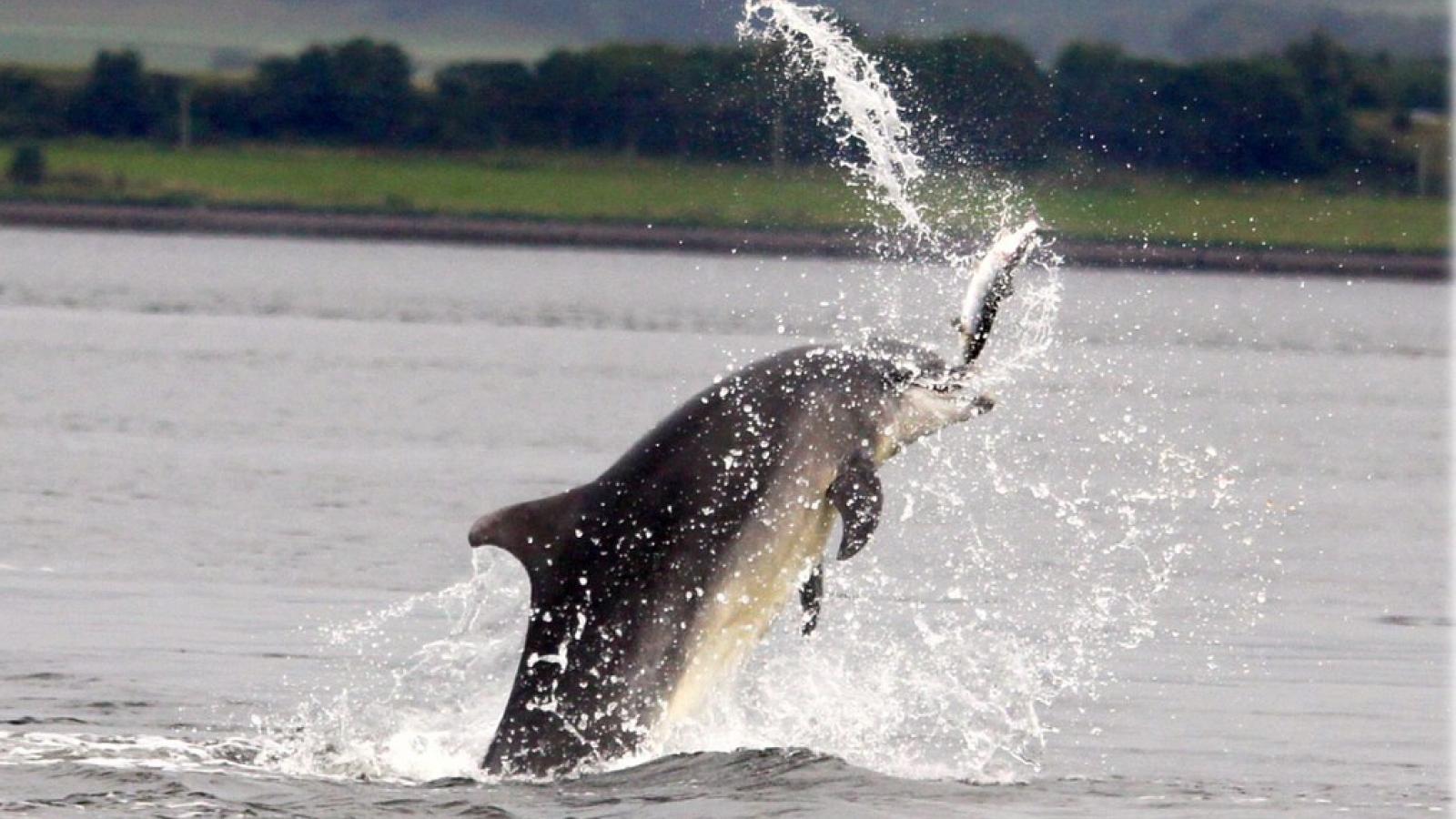 Video: Cá heo mũi dài khuấy bùn bắt cá