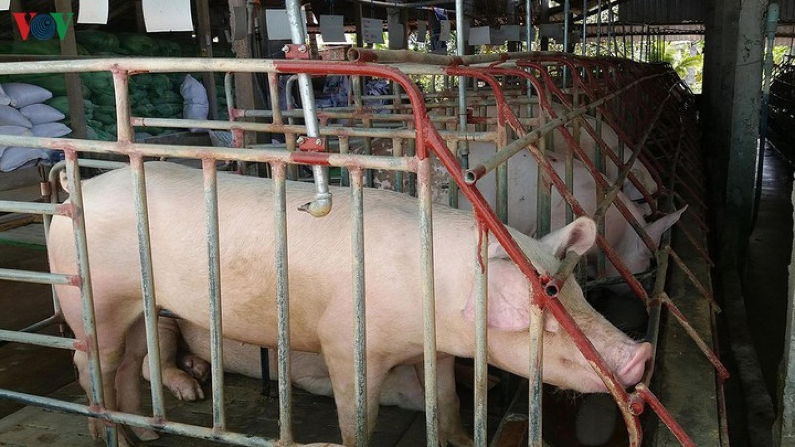 Ngăn chặn vận chuyển trái phép lợn ở biên giới Lào-Việt Nam-Campuchia