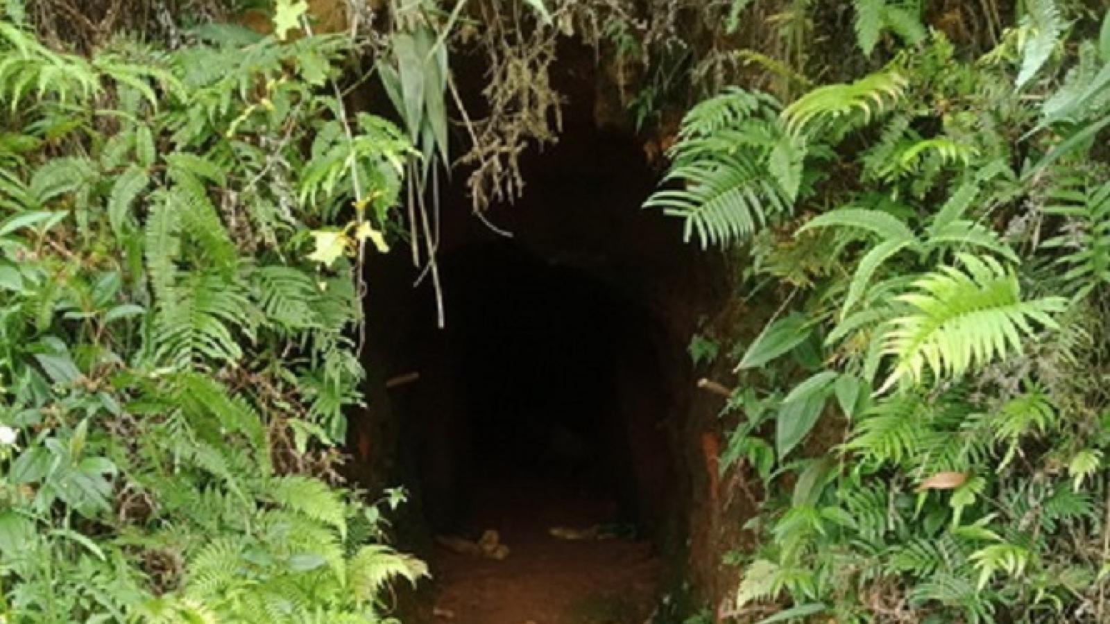 Đà Nẵng đề xuất đánh sập các hầm khai thác vàng trái phép tại rừng Hòa Bắc