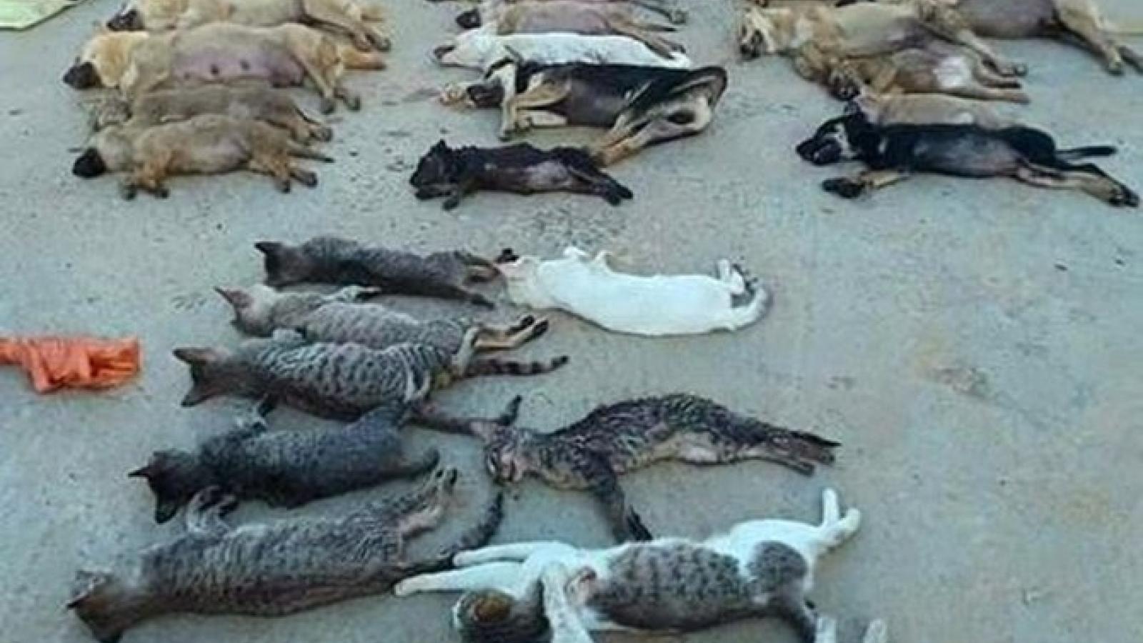 Thịt chó, mèo bị đánh bả bằng xyanua: Ăn có nguy hiểm?