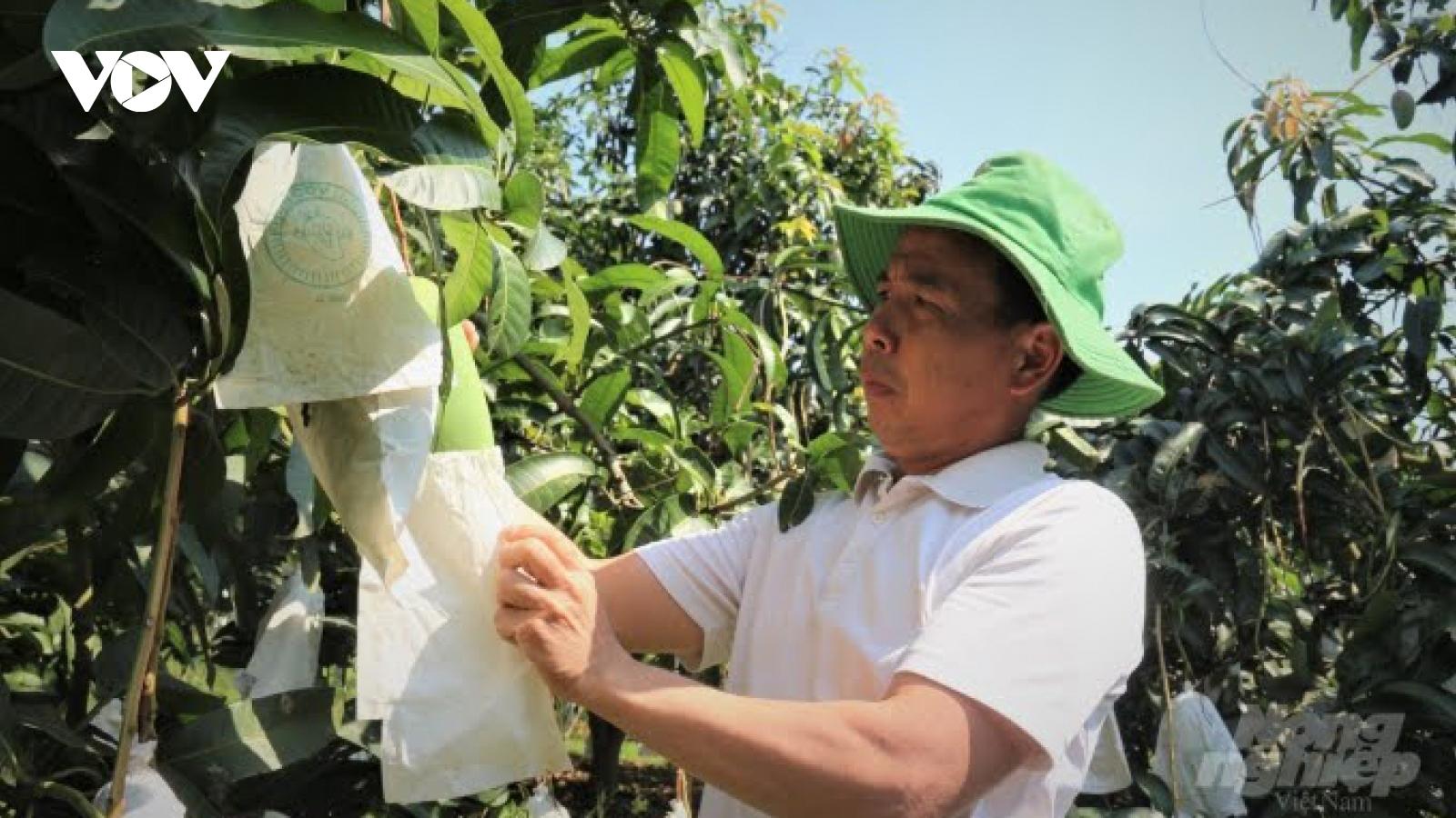Nông sản Sơn La vươn xa, đón lợi thế từ Hiệp định EVFTA