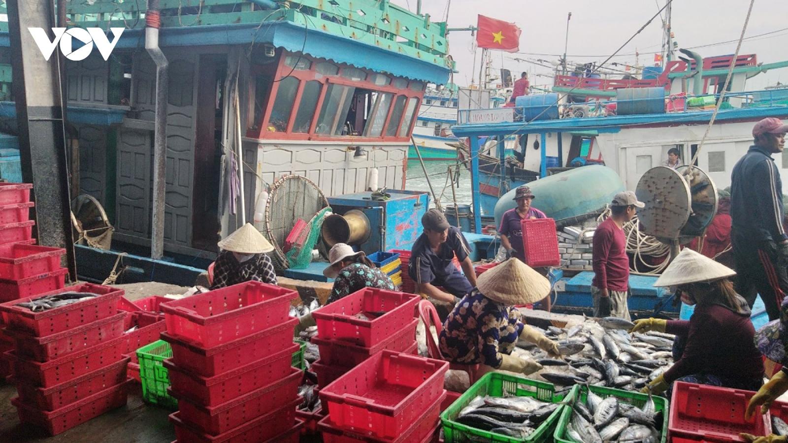Hạ tầng nghề cá yếu kém ảnh hưởng đến việc gỡ thẻ vàng EC
