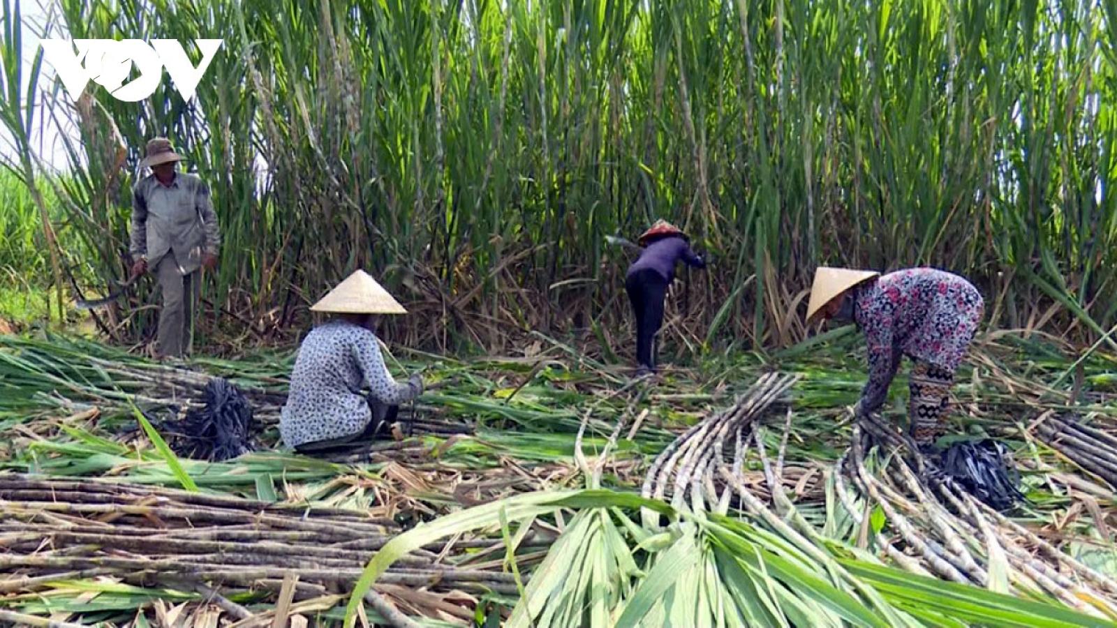 Khởi xướng điều tra đường mía có xuất xứ từ Thái Lan vào Việt Nam