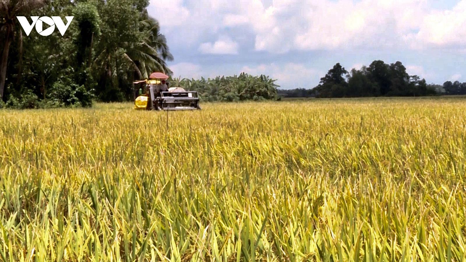 Nông dân Bạc Liêu thu nhập cao từ vụ lúa Hè Thu