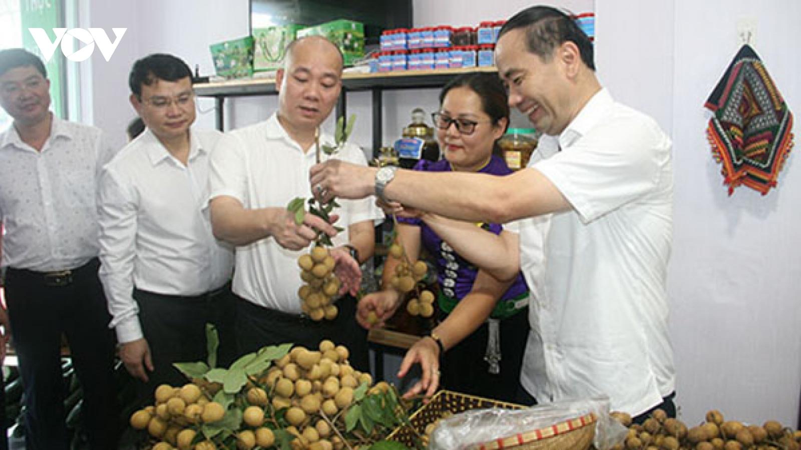 Sơn La phát triển cây ăn quả trên đất dốc, chủ trương hợp lòng dân