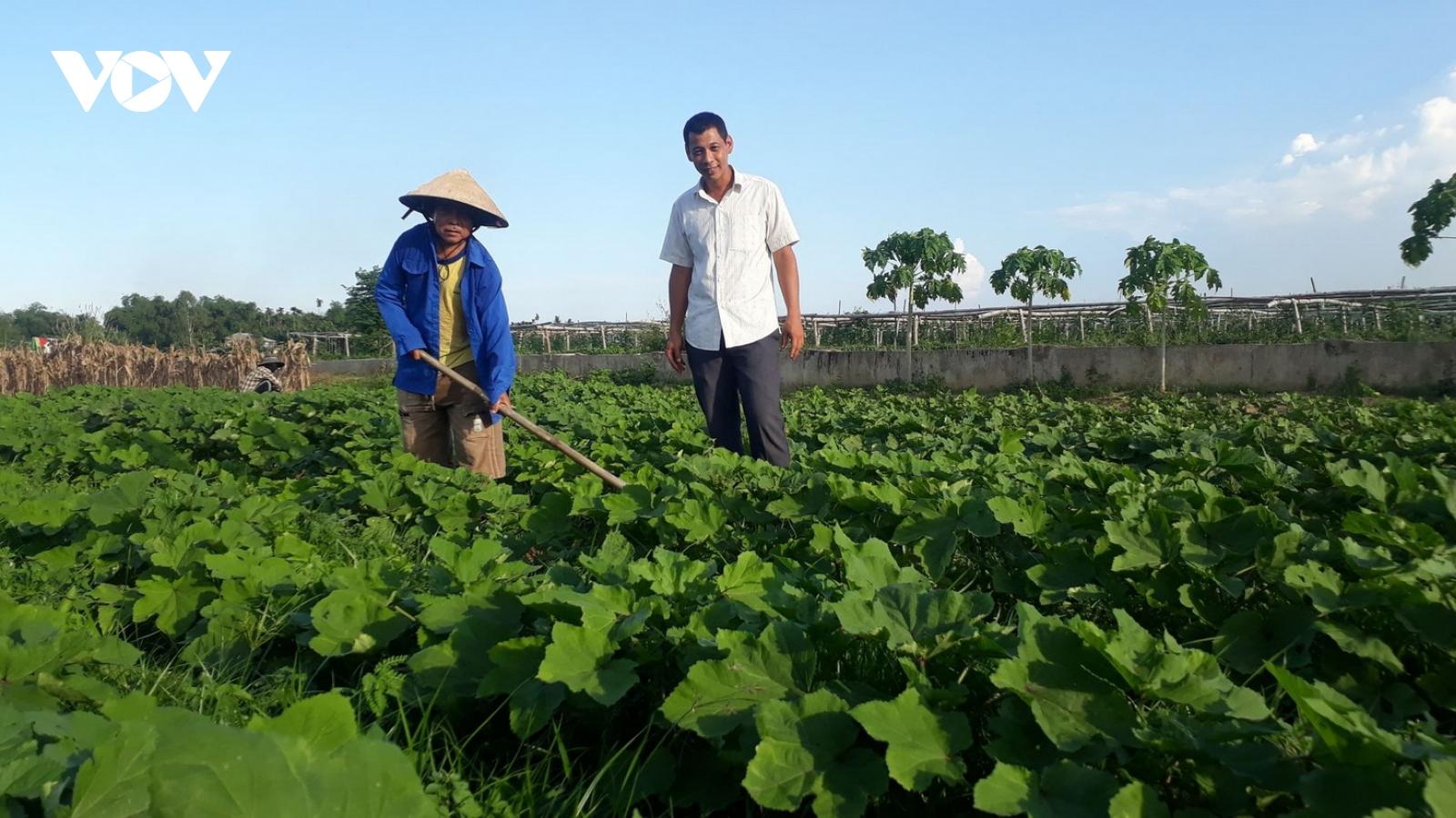 Liên kết sản xuất thực phẩm sạch đang chứng tỏ lợi thế