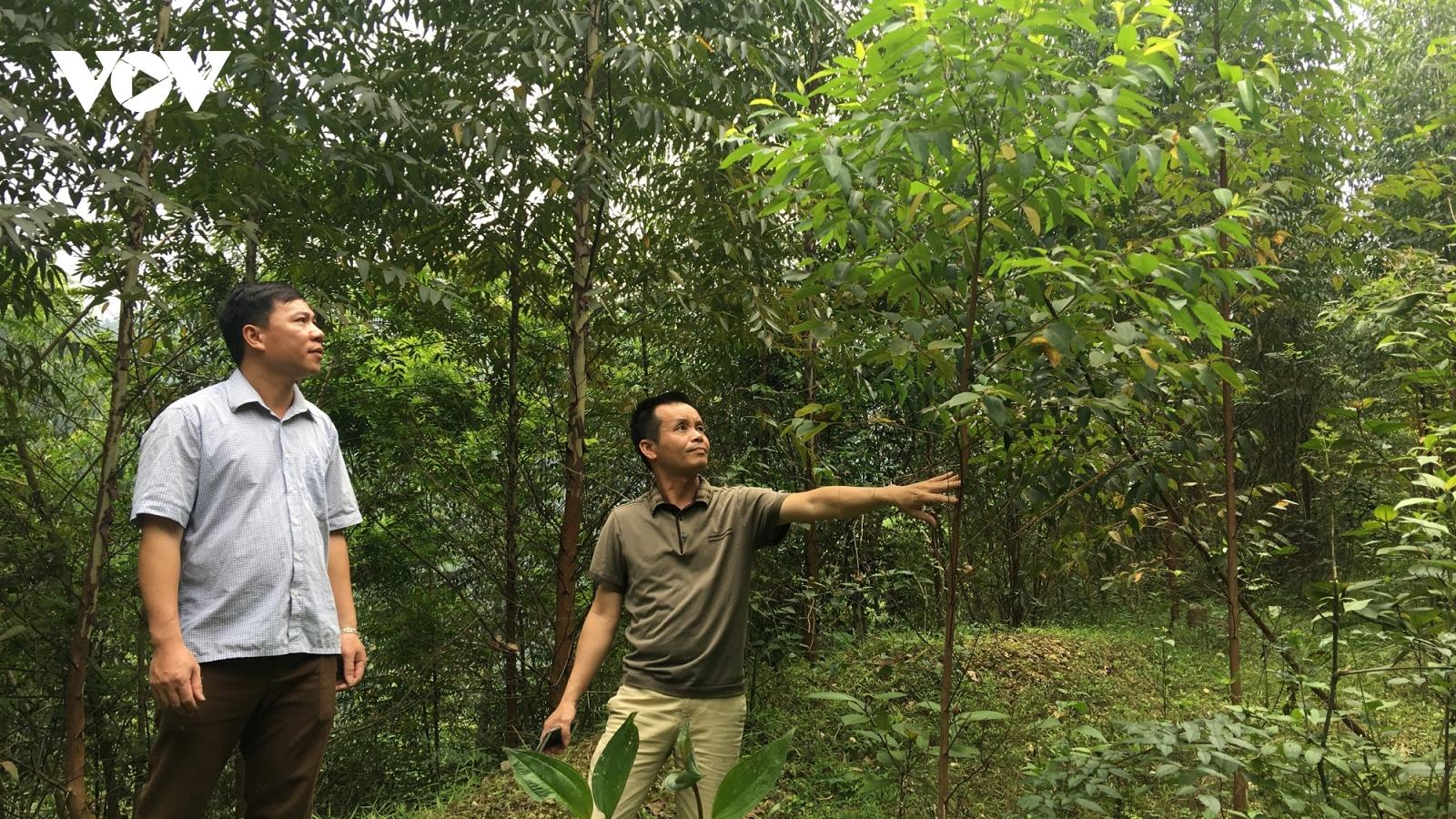 """Băn khoăn khi Công ty TNHH Lâm nghiệp Bắc Kạn được hưởng hỗ trợ """"đóng cửa rừng tự nhiên""""?"""