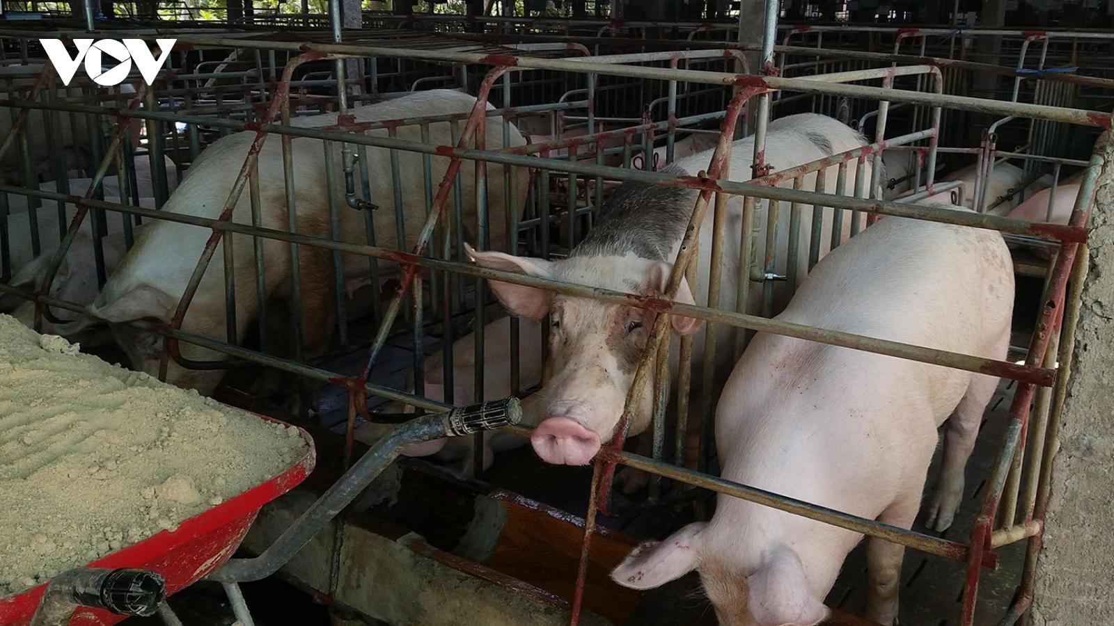 Xây dựng chuỗi cơ sở sản xuất chăn nuôi phòng dịch tả lợn châu Phi