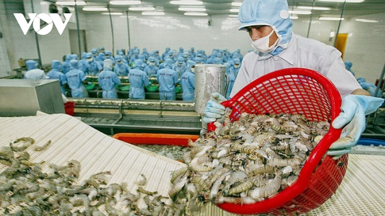 Local shrimp quality must improve after enjoying tax incentives from EVFTA