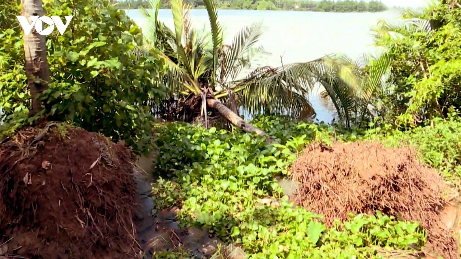 Sạt lở nghiêm trọng, hàng chục hộ dân sống trên Cồn Hồ (Trà Vinh) kêu cứu