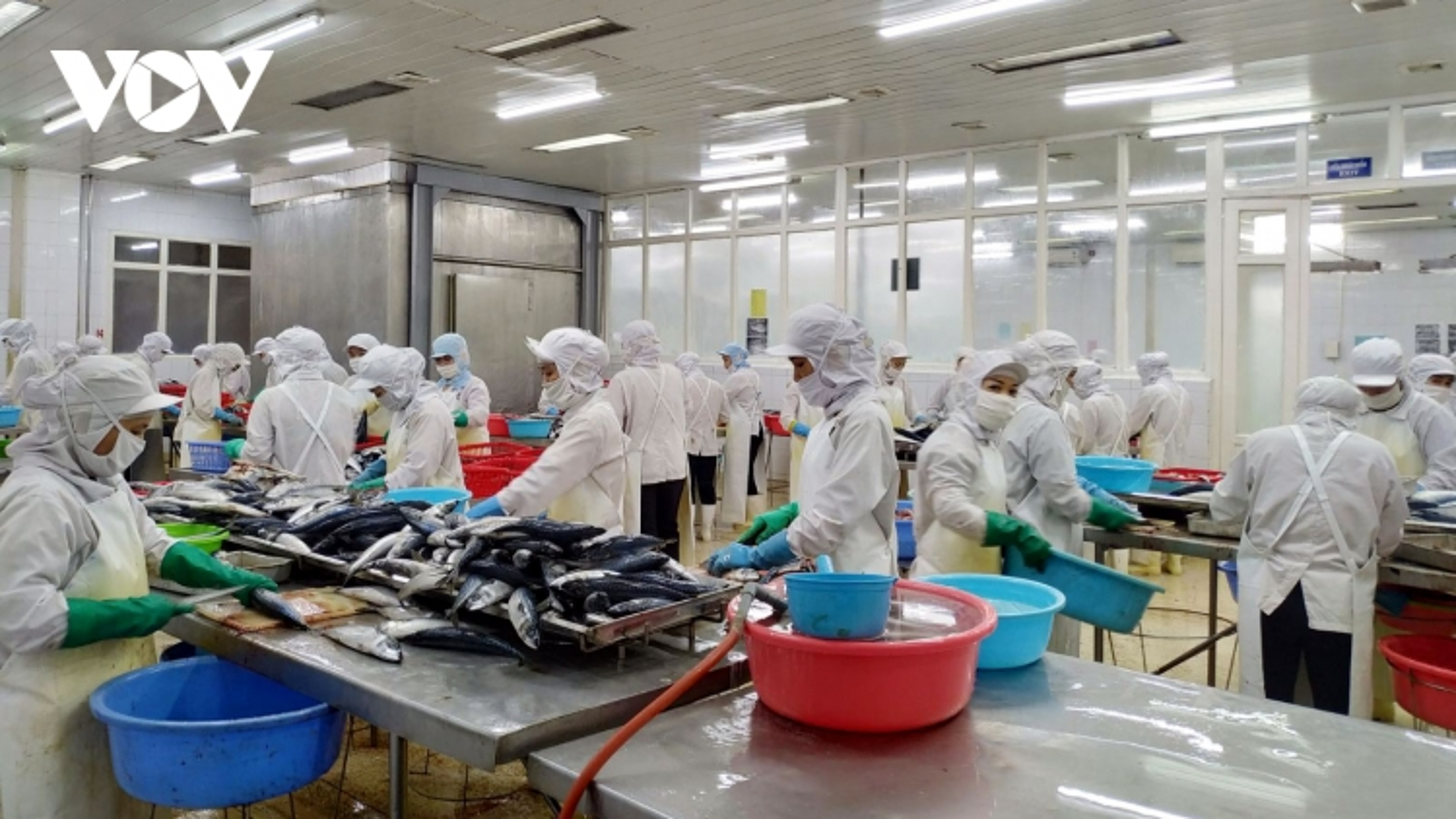 Doanh nghiệp thủy sản Quảng Ninh trước cánh cửa EVFTA
