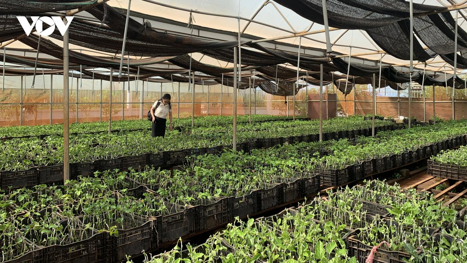 EVFTA: Áp lực và triển vọng chuyên nghiệp cho nông nghiệp Gia Lai