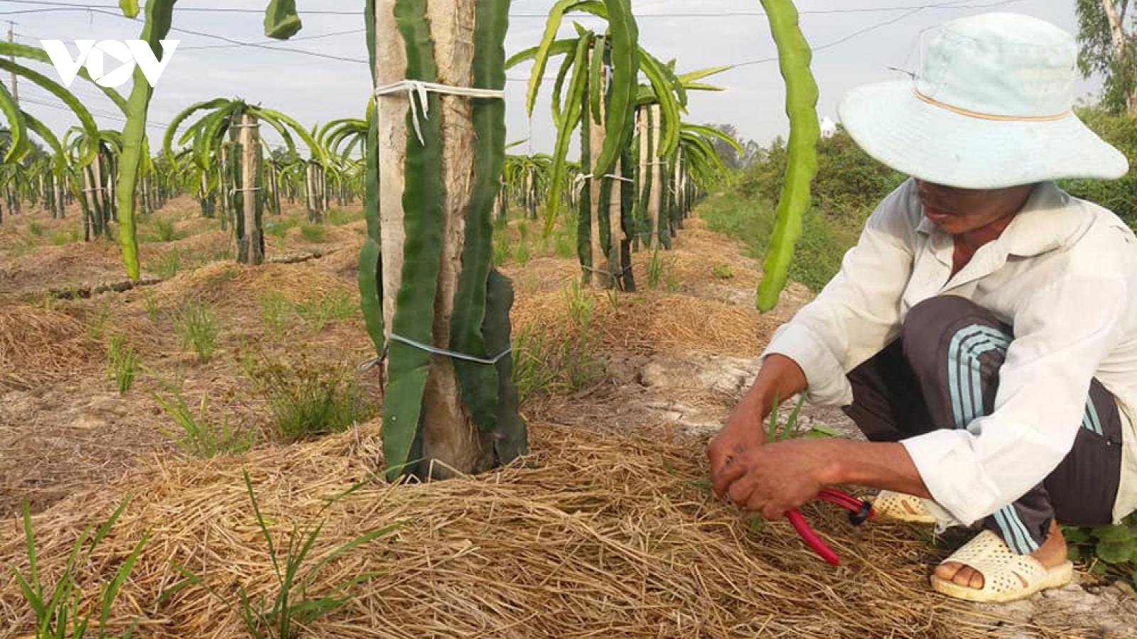 ĐBSCLsớm chủ động phòng chống hạn mặn bảo vệ vườn cây ăn quả