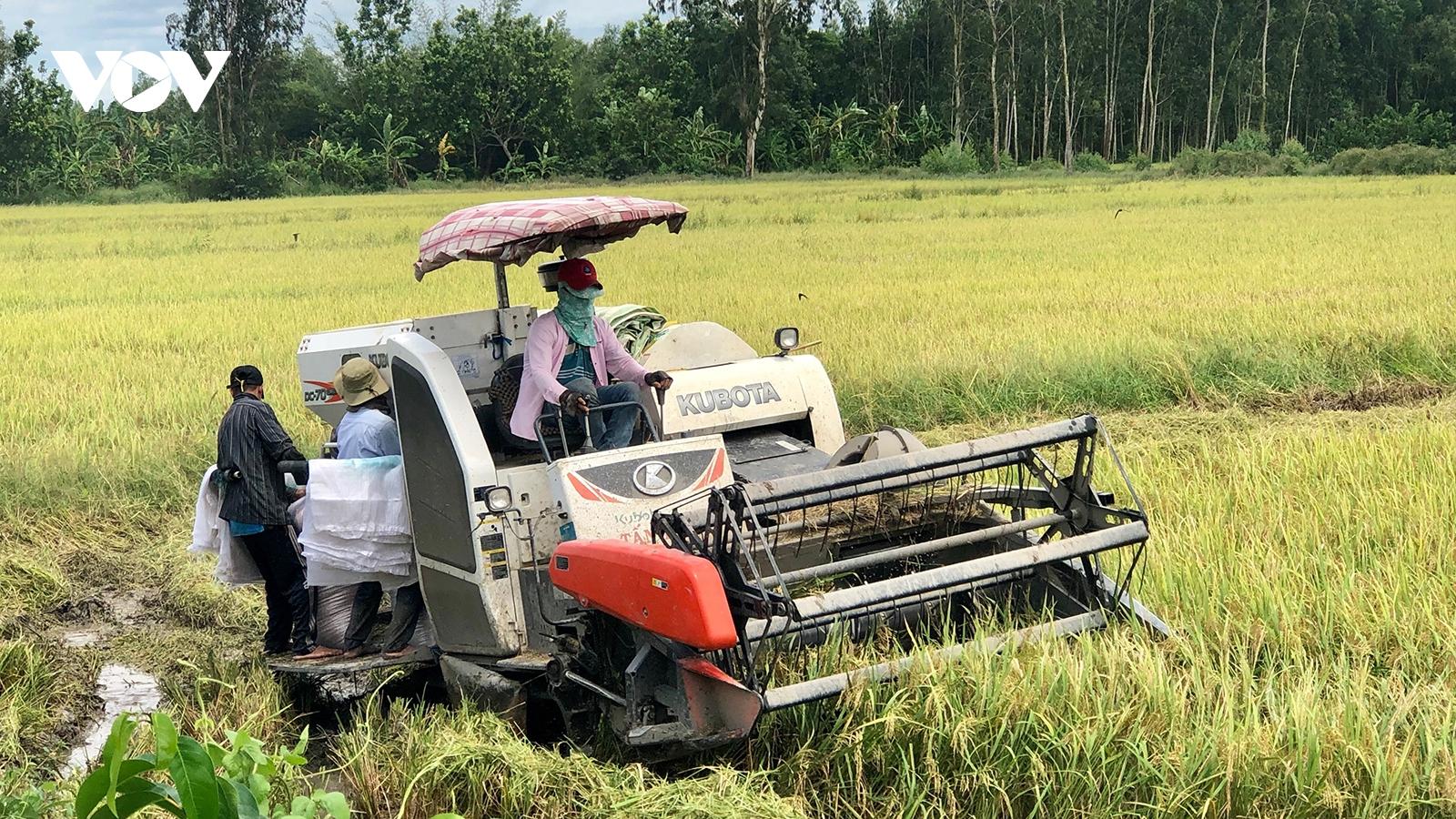 Vụ lúa thứ 3 trong năm người dân Hậu Giang được mùa được giá