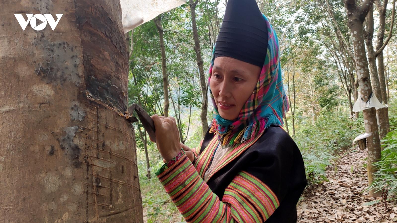 Nông dân Lai Châu thu nhập hàng trăm triệu đồng mỗi năm từ nông nghiệp