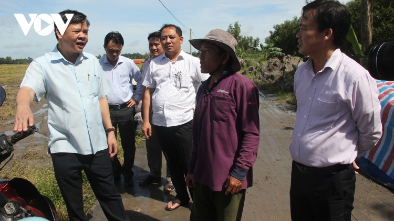 Hậu Giang khuyến cáo nông dân thu hoạch nhanh diện tích lúa Thu đông