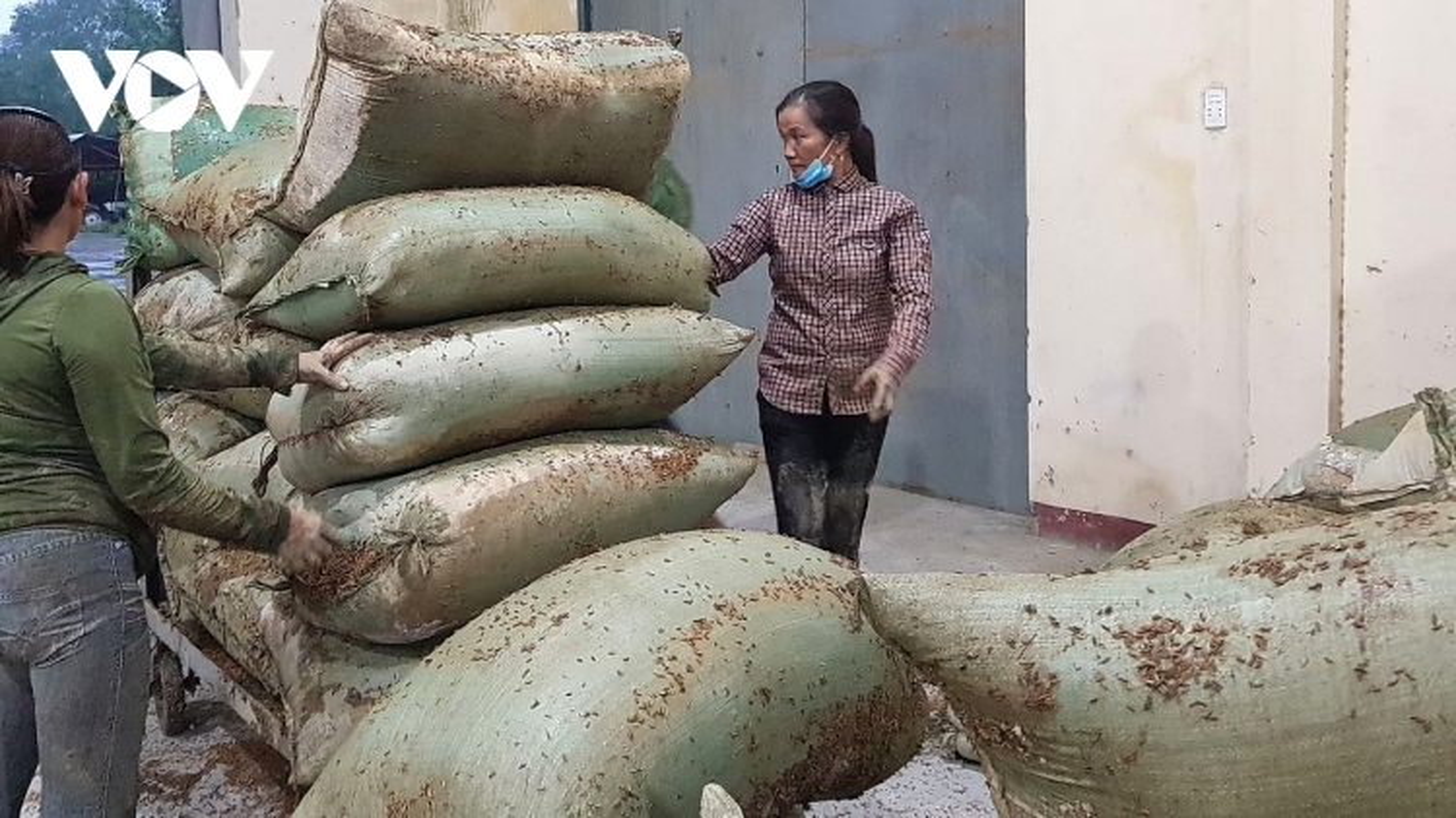 Lúa ngâm nước nảy mầm, người dân vùng lũ nơm nớp lo thiếu đói