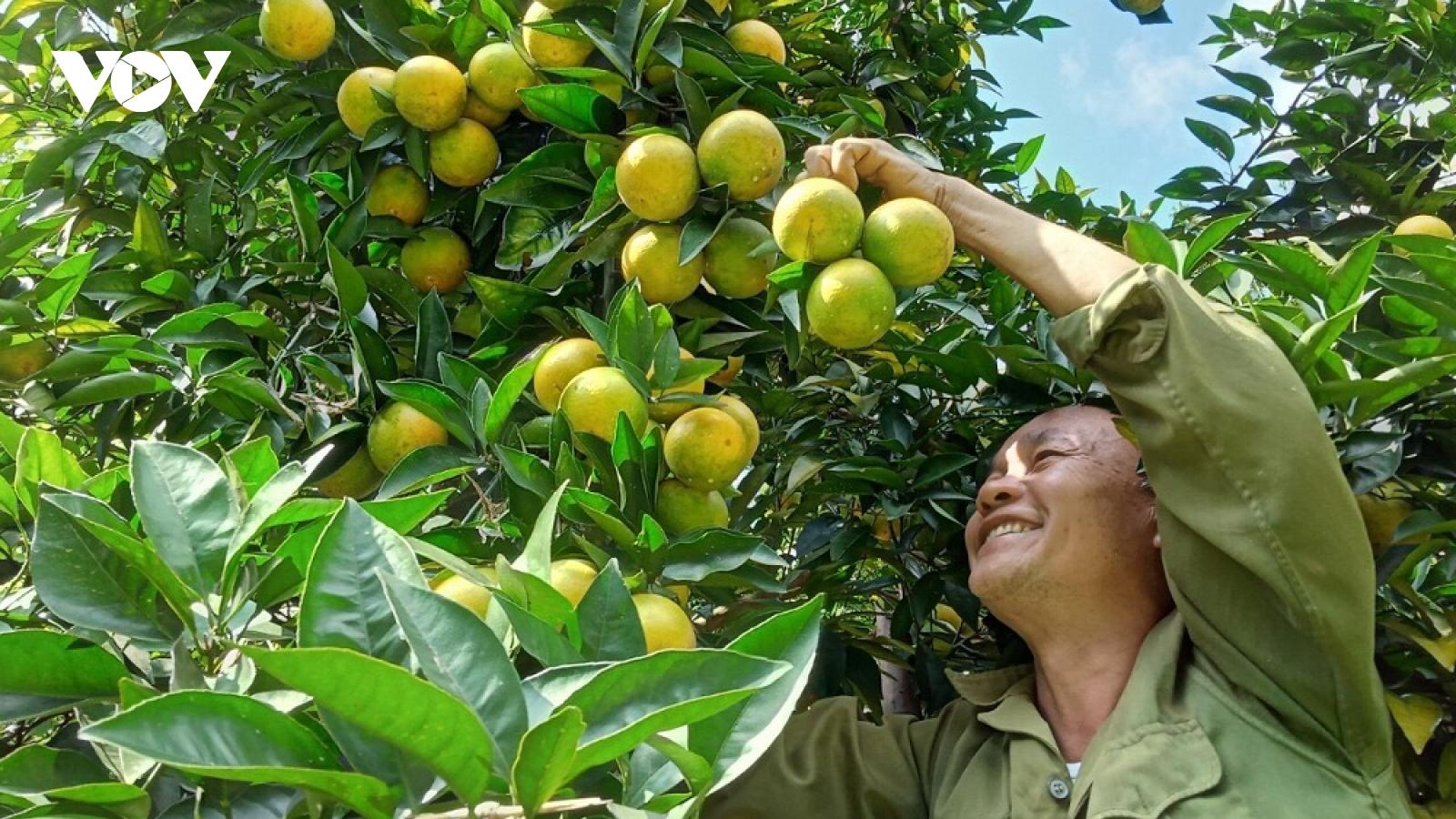 Đặc sản hoa quả Sơn La giúp người dân làm giàu trên đất dốc