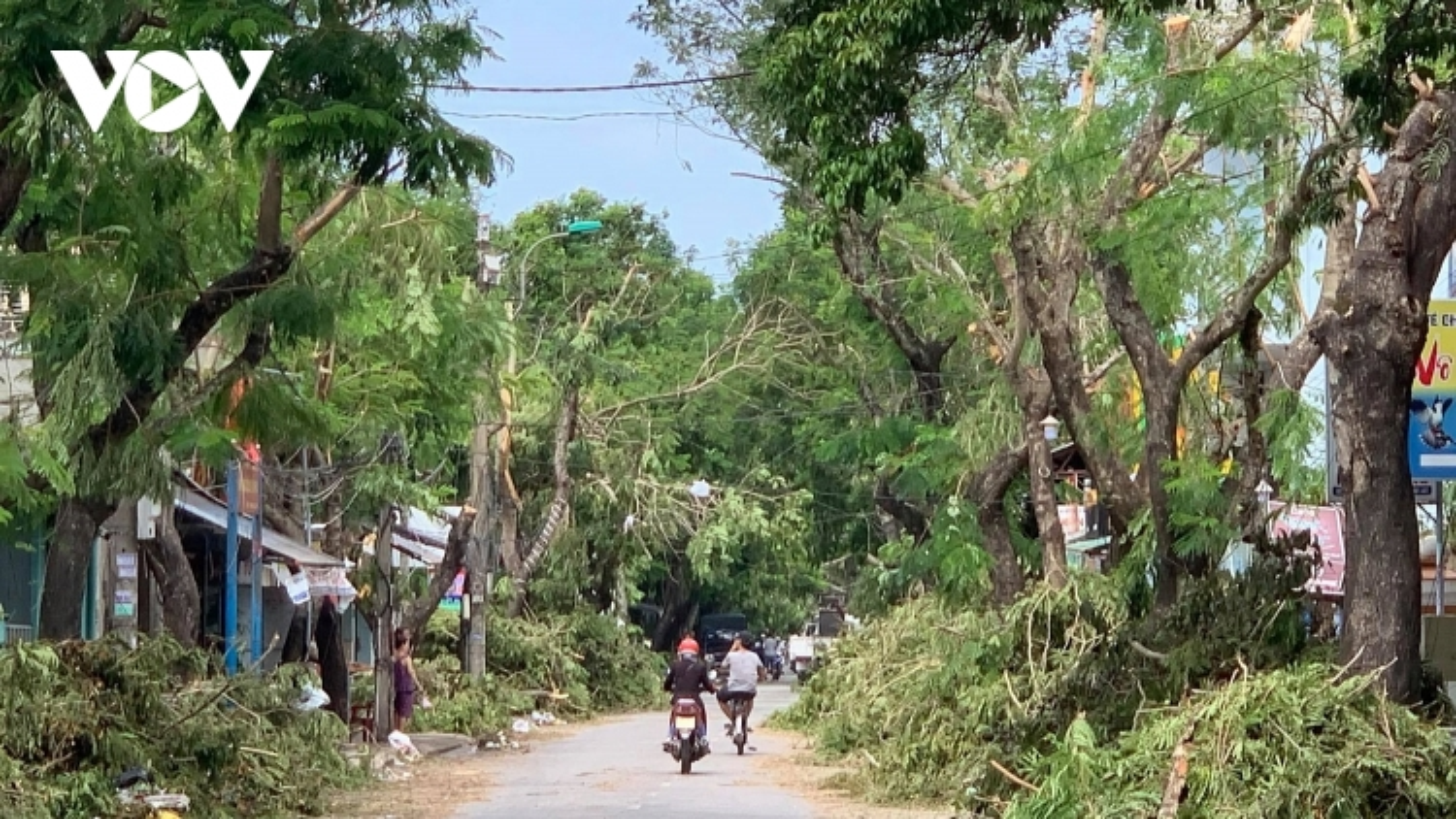 Cây xanh đổ ngã bất thường trong bão số 5, Huế sẽ trồng loại cây đô thị phù hợp
