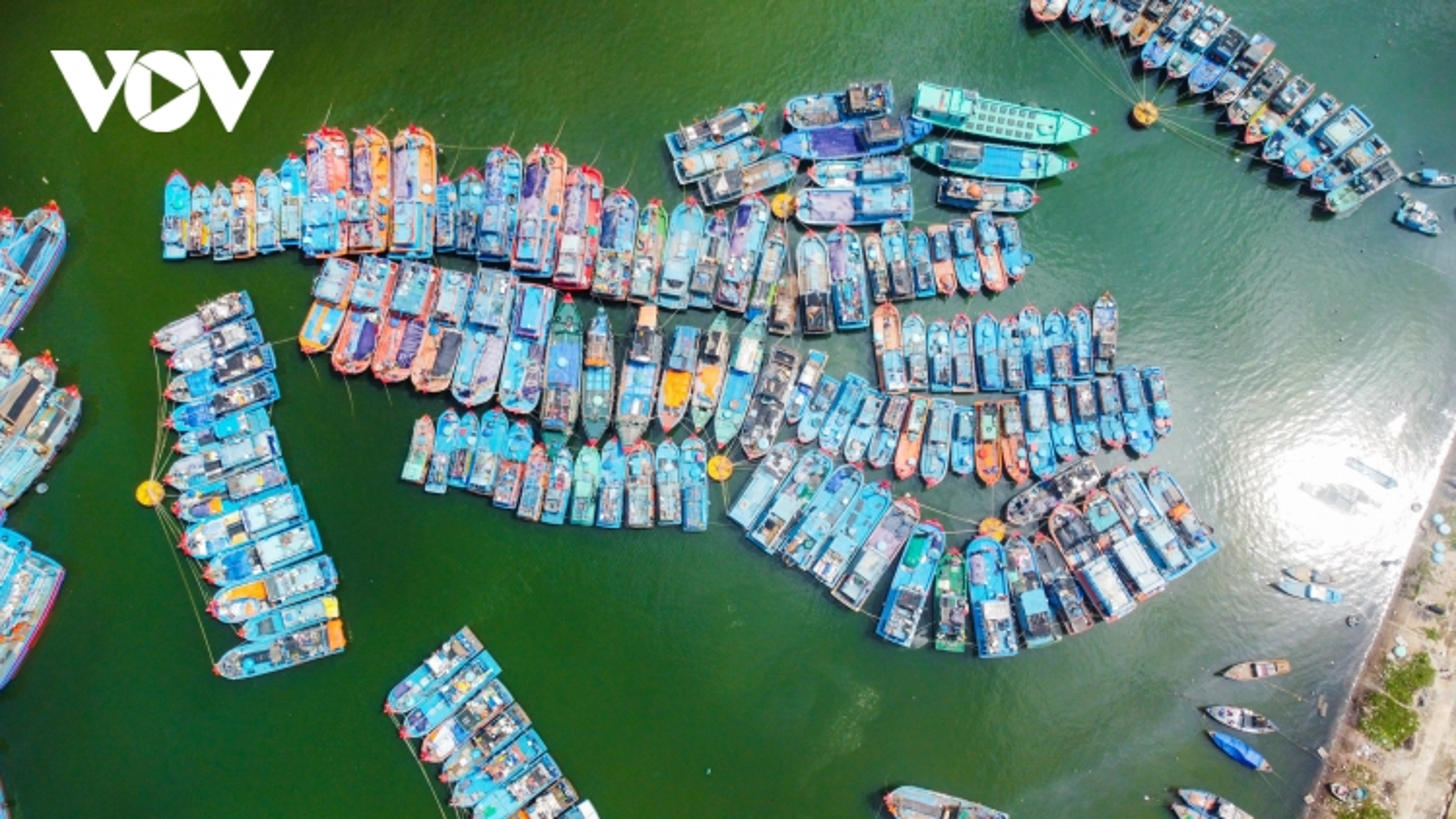 Ảnh: Tàu thuyền neo đậu ngay ngắn tránh bão số 9 tại âu thuyền Thọ Quang