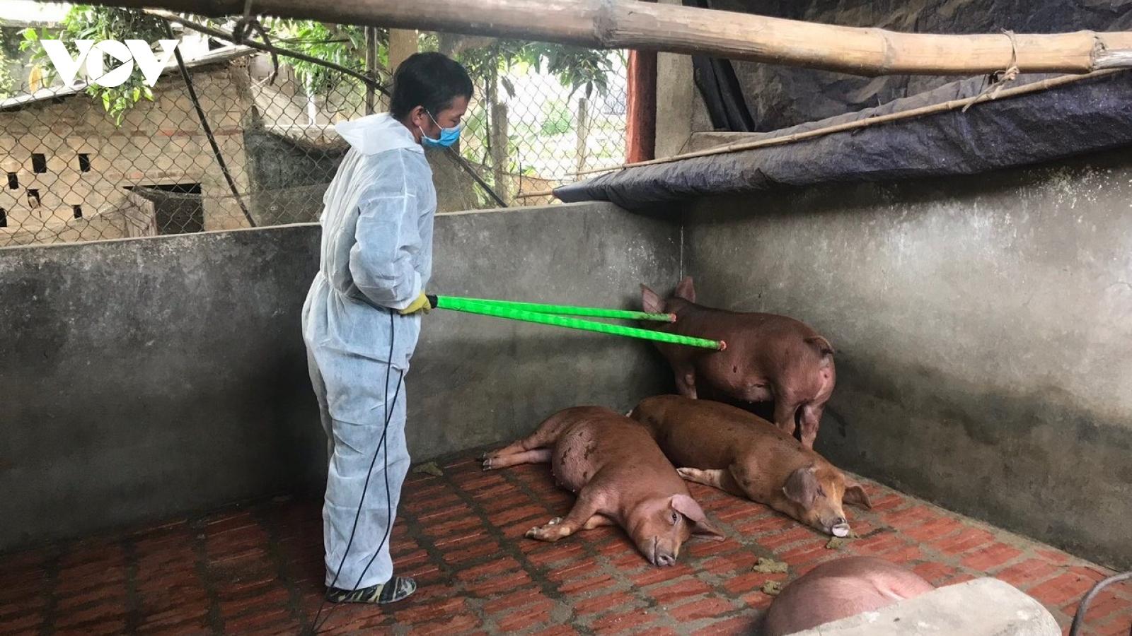 Sơn La vẫn còn 83 bản ở 7 huyện, Thành phố có dịch tả lợn Châu Phi