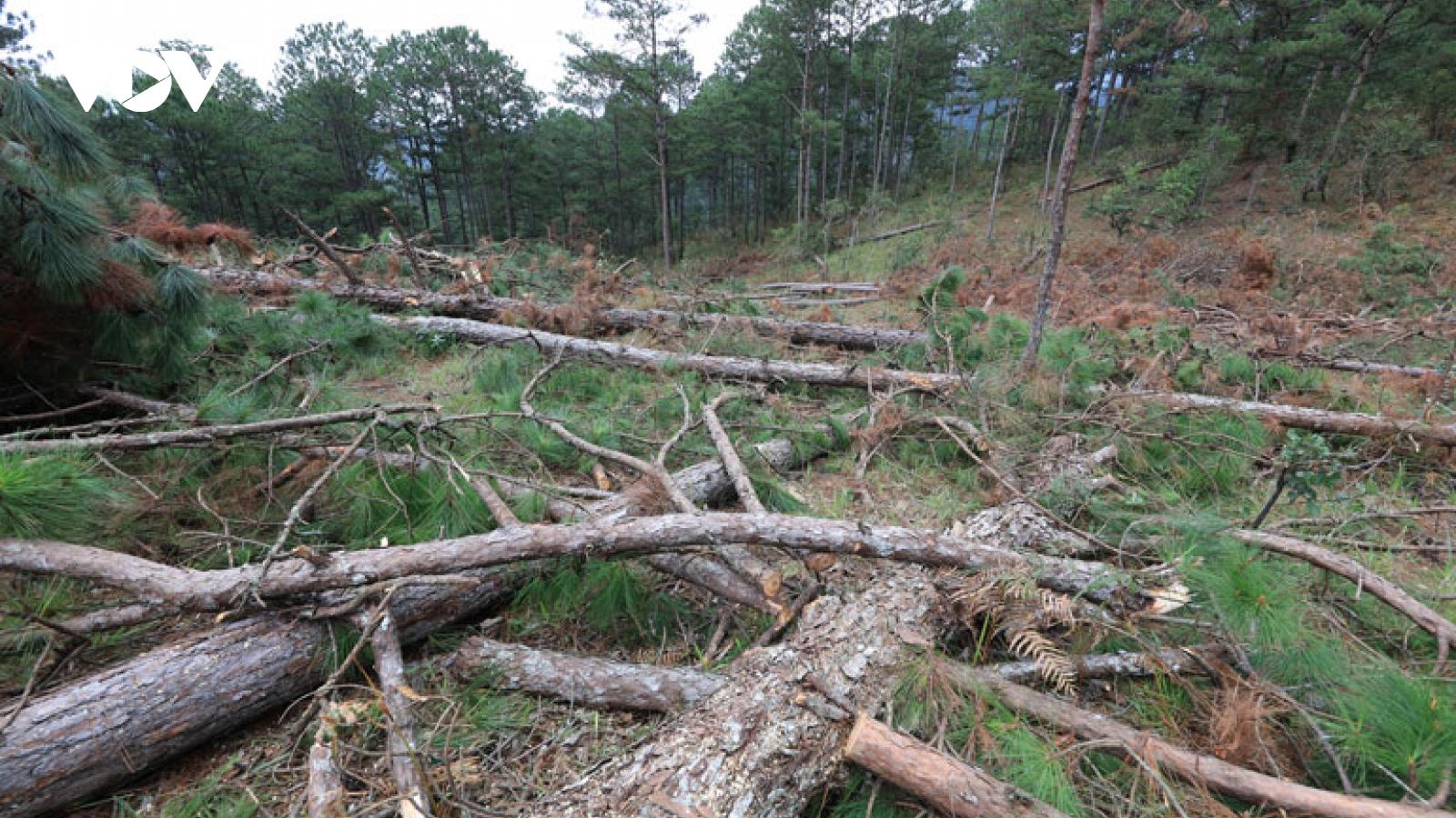 Lâm Đồng xử phạt đối tượng phá rừng chiếm đất
