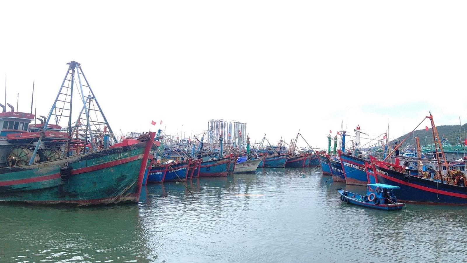 Ngư dân gặp khó vì tàu cá không có giấy đảm bảo an toàn vệ sinh thực phẩm