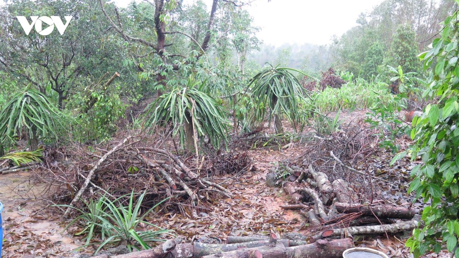 Khẩn trương khôi phục trồng trọt, chăn nuôi sau bão lũ, không để thiếu lương thực Tết