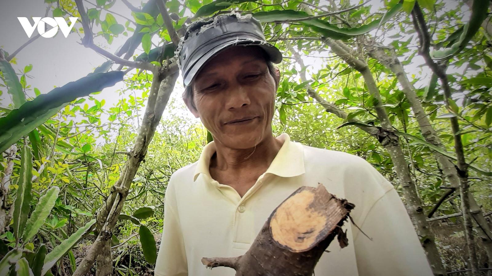 Lão nông làm kinh tế từ những chiếc đũa, muỗng bằng cây mắm