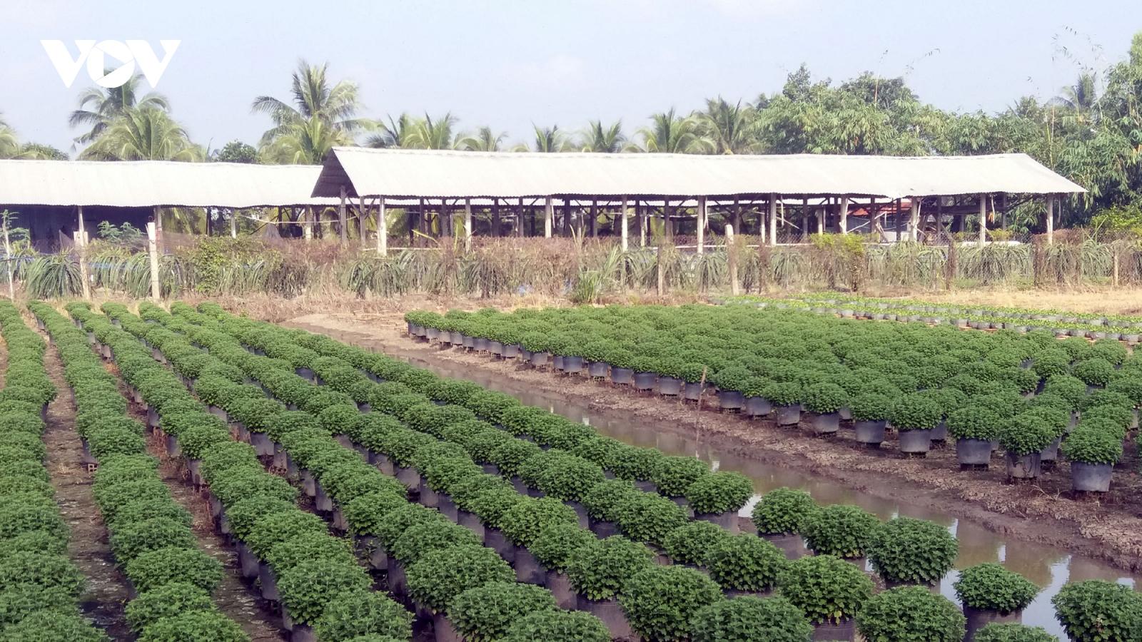 Thị trường hoa Tết Tân Sửu: Tiền Giang sẵn sàng 1 triệu giỏ hoa